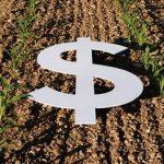 Investire nei terreni agricoli: perché conviene